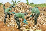 Army digs in for organic in Jaffna as Maha approaches