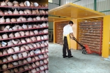 Fertiliser decisions on the coconut industry
