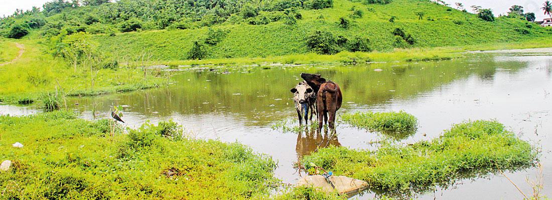 Meethotamulla still an environmental hazard; Plans for urban park still underway