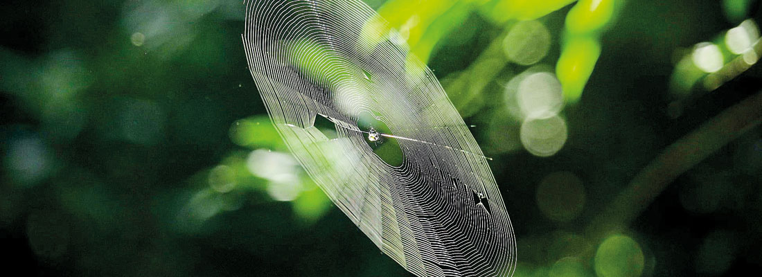 Blowing in the wind – silky threads of flying spiders cause wonder